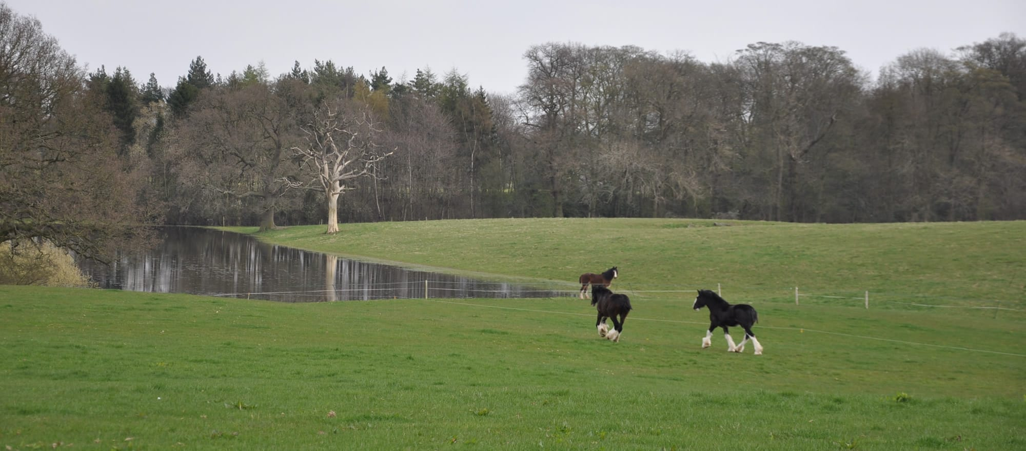 Come and Select Magnificent Horses in Magnificent Countryside